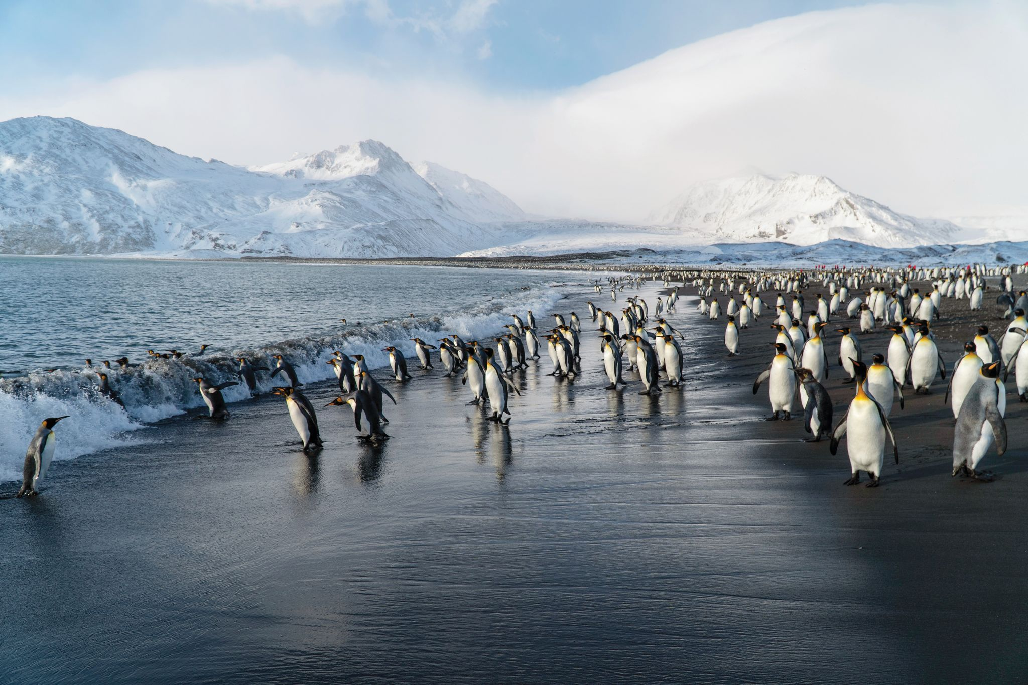 Great expeditions on Silversea